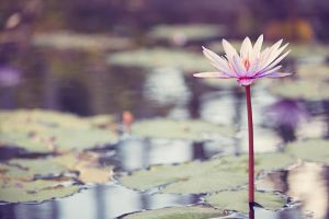 Water Lily Pond by CandiceSmithPhoto