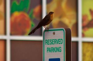 Reserved Parking by Sherjaxon