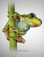 Frog coloured up by rojobe