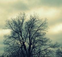 Tree2 by twoshoelaces