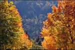 colors of autumn by brijome