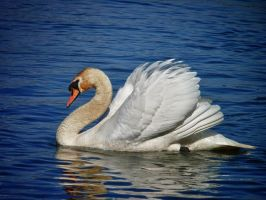 Swan hdr by krychu84