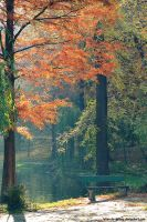 autumn light by Iulian-dA-gallery