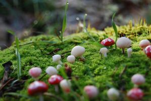 Fairy Ring by DaisyDayes