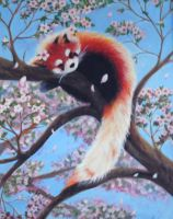 Red Panda by Faeyne-Silvercloud