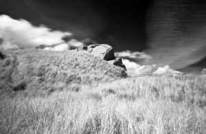 Waves of Grass by padraig13