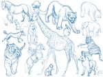 Animal Sketches by Tigerty