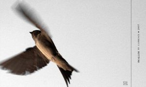 swallow by inflight