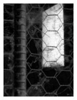 Caged by Taryn2007