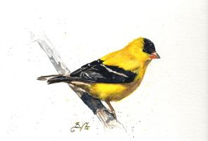 Goldfinch by bcduncan