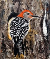 Red Bellied Woodpecker by CarolynYM