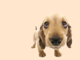 Puppy Linux 4.3.1 Wallpapers by xulfikar