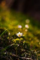 Spring here I come II by ervin21
