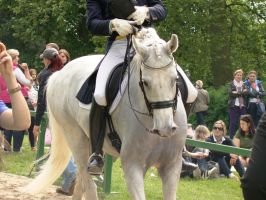Dressage Riding Competition Stock Head Detail by LuDa-Stock
