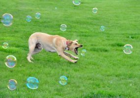 bubble pup by DoubtfulSound