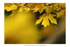 Autumn in Malomvolgy - III by DimensionSeven