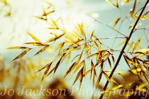 Meadow Grass 3 by Britwitch-1981
