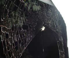 Web2 by Tortured-Raven-Stock
