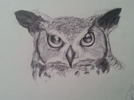 Horned owl by Creeate97