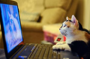Who says cats don't use Facebook? :) by Unclespikey