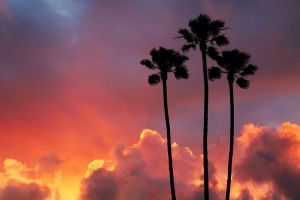 Tres Palms by purplesnow