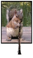 Squirrel Playing the Clarinet by deaddonkeysrule