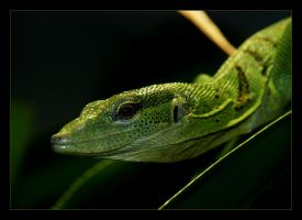 Green tree monitor by marble911