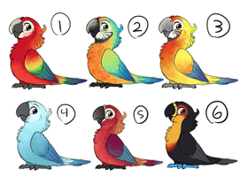 Parrots -Closed- by Cimburleigh
