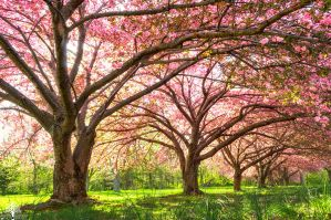 Spring's Solace by JustinDeRosa