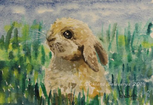 Watercolor and Ink #18 - Rabbit by Oksana007