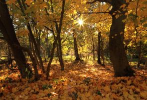 Autumn Woods by scotto
