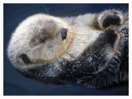 Otter II by ThatPhotograph