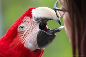 Red Macaw by Funkelstein