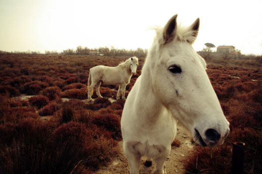 White horses 02 by SOFIg
