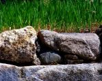 Rock Wall Grass by BachLynn23