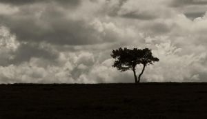 All alone as the storm approaches by BikeBoyPunk