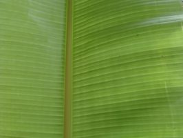 Banana Leaf by deviant-Rashy