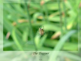 The Trapper by isays