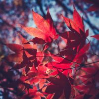 Leafs by pagit