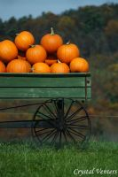 Pumpkins in a Wagon by poetcrystaldawn