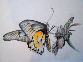Butterfly by JaneBroucil