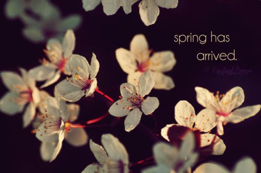 spring has arrived. by this-is-the-life2905