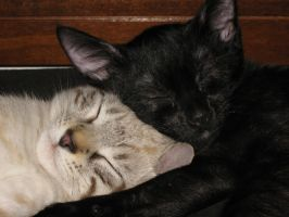 My cats Etci and Ka sleeping.. by Nipol
