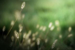 Grass by RecluseKC