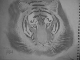 Tiger by Pepsco