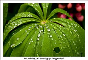 Its raining - Its pouring by SnapperRod