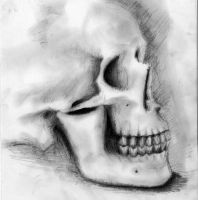 Skull by Archannus