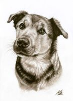 Dog Portrait Benny by ArtsandDogs
