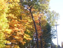 Fall colors by Nyte-Tyme-Vampire