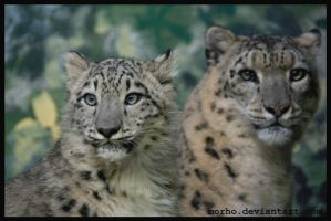 mother and son by morho